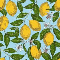 Vintage seamless pattern with lemons and flowers vector