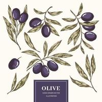 Olive branches set vector