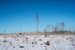 bosque disperso devastado por el fuego en la nieve foto