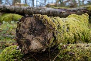tronco de árbol cubierto de musgo foto