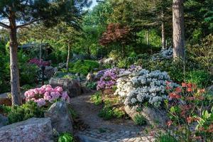 jardín floreciente del rododendro foto