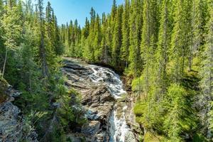 Creek running through green fir trees photo