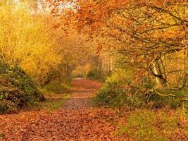Autumn colours at Barlow Common, North Yorkshire, England photo