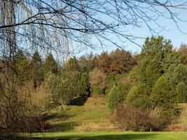 Trees on a hillside with beautiful autumn foliage photo