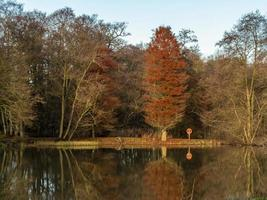 Trees reflected in a lake in early winter, North Yorkshire, England photo