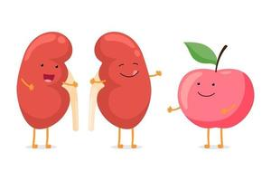 Strong healthy happy kidney smiling emotion character with red apple. Human anatomy genitourinary system internal organ with eco food nutrition. Vector vegetable cartoon illustration