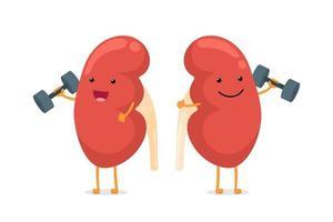 Caricatura sonriente personaje de riñón sano con pesas. órgano interno del sistema genitourinario de anatomía humana dando consejos para mantenerse activo y haciendo deportes en forma ilustración vectorial vector