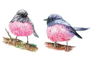 Pink Robin illustration watercolor set vector