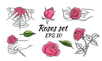 Set of roses. Pink roses. Collection of vector illustrations with flowers. Buds, leaves, roses in hands.