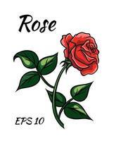 estilo de dibujos animados de rosa roja sobre un fondo blanco. vector
