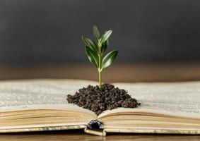 libro abierto con planta en el suelo foto