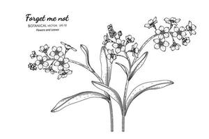 Forget me not flower and leaf hand drawn botanical illustration with line art. vector