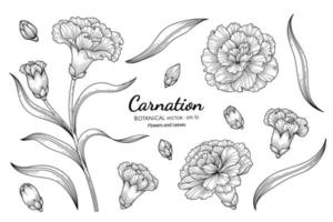 Carnation flower and leaf hand drawn botanical illustration with line art on white backgrounds. vector