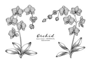 Orchid flower and leaf hand drawn botanical illustration with line art. vector