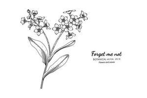 No me olvides, flores y hojas dibujadas a mano ilustración botánica con arte lineal. vector