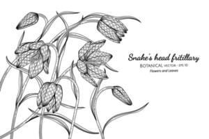 Snake's head fritillary flower and leaf hand drawn botanical illustration with line art on white backgrounds. vector