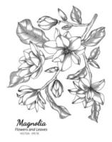 Magnolia flower and leaf drawing illustration with line art on white backgrounds. vector