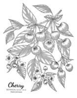 Ilustración botánica dibujada a mano de fruta de cereza con arte lineal sobre fondos blancos. vector