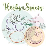 Natural herbs and spices to prepare healthy meals vector