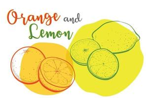 Drawing lines of oranges and lemons with vivid colors. vector