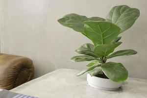 Green plant on the table photo
