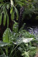Varieties tropical rainforest foliage plants photo