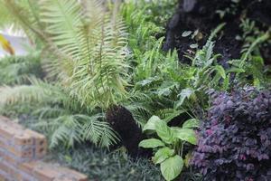 Tropical plants in a garden photo