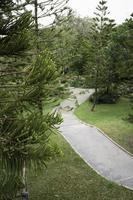 Conifer branch in lush garden photo