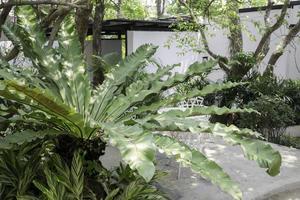 Green summer garden of resort exterior photo