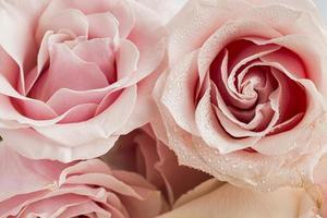 Vista cercana del concepto de día de San Valentín con rosas foto