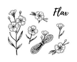 Set of Set of hand drawn flax flowers, branches and linen textile elements. Vector illustration in sketch style for linen seeds and oil packaging