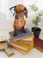 Cute dog with glasses sitting on books photo