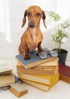 Cute dog sitting on books photo