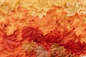 Flat lay fall leaves surface photo