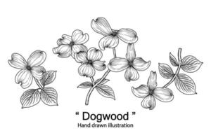 bosquejo conjunto decorativo floral. dibujos de flores de cornejo. arte de línea negra aislado sobre fondos blancos. ilustraciones botánicas dibujadas a mano. vector de elementos.