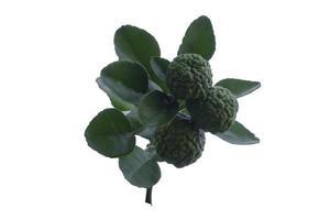 Bergamot isolated on a white background photo