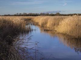 Cama de juncos en la reserva natural de Far Ings, Lincoln, Inglaterra foto
