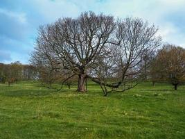 Bare winter trees in a green meadow photo