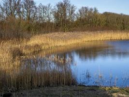 Cañas y humedales en la reserva natural de Far Ings, Lincoln, Inglaterra foto