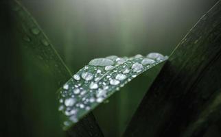 Water drops on fresh green leaf photo