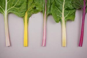 acelga, verdura de hoja arcoíris. foto