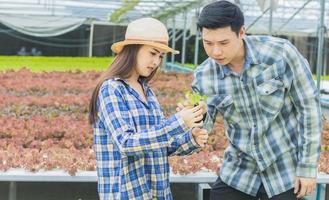 Young farmers working on organic vegetable farm photo