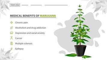 Medical benefits of marijuana, poster for website with bush of cannabis in a pot. Benefits uses of medical marijuana vector