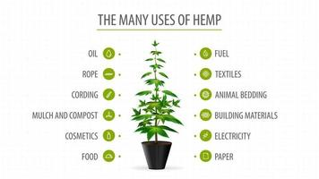 Many uses of hemp, white banner with infographic of uses of cannabis and greenbush of cannabis plant vector