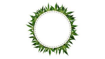 marco de círculo de hojas de cáñamo alrededor de un espacio vacío blanco. Plantilla de marco de hoja de cannabis para la industria del cannabis. vector