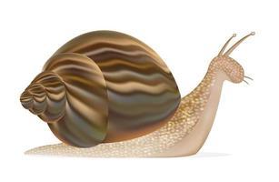 un vector de caracol