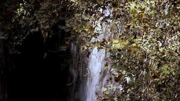 cachoeira na natureza selvagem video