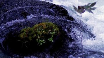 rio fluindo ao redor de uma pedra na natureza selvagem video