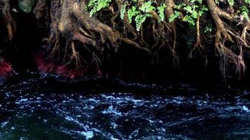 schneller Fluss in wilder Natur video