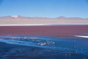 Colorful Laguna Colorada on the plateau Altiplano in Bolivia photo